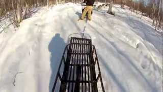 Dogsledding In North Pole Alaska #goproalaska Gopro Movie