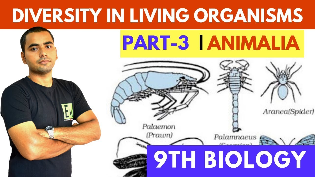 Image of: Vertebrates Diversity In Living Organisms part3 Kingdom Animalia Tutorialspoint Diversity In Living Organisms part3 Kingdom Animalia Youtube