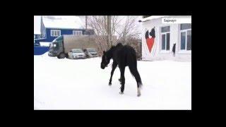 В приюте «Ласка» появился конь