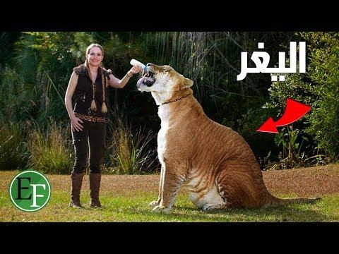 تزاوج غريب بين الحيوانات ادى لظهور انواع لن تصدق وجودها..!! thumbnail