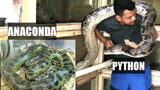 PERBEDAAN ANACONDA & PYTHON