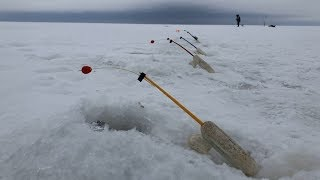 Ловля корюшки на Финском заливе | Дамба | Южная сторона