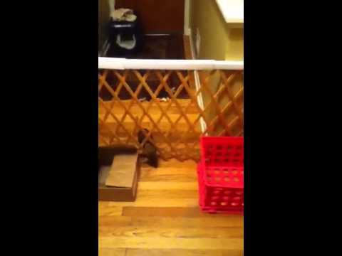 Puppy escapes gate