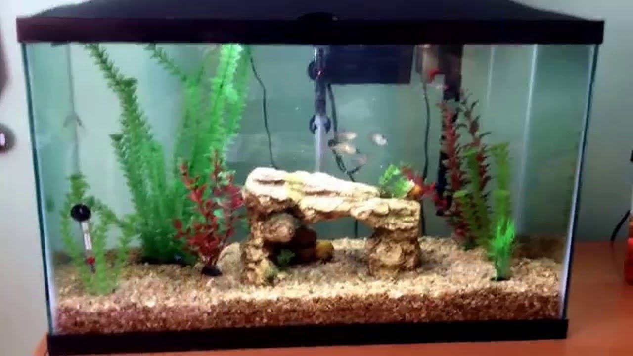Marineland 29 gallon fish tank youtube for 29 gallon fish tank