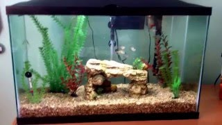 Marineland 29 Gallon Fish Tank