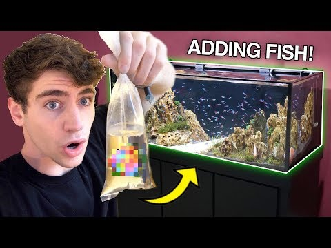 ADDING *NEW* FISH To My DREAM TANK... (what Did I Get?!)