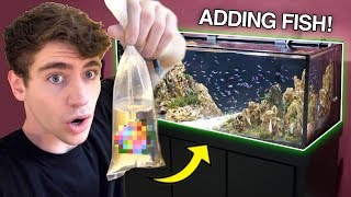 adding-new-fish-to-my-dream-tank-what-did-i-get