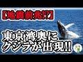 【地震予兆】東京湾で目撃されたクジラ!!  大地震の前兆か!?   アユやイワシの大量発生も!!   ≪気になる雑学≫