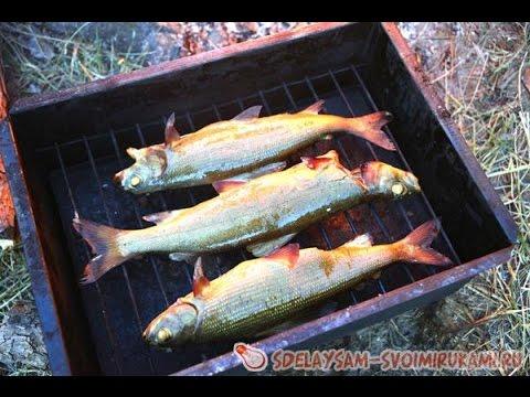 Рыба муксун не отличается большими размерами, но её считают деликатесным видом: стоит муксун не так дёшево – 400-700 рублей за 1 кг, а купить.