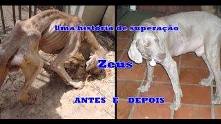 A história do Zeus! (cão)