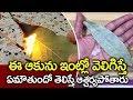 ఇంట్లో దోమలు పోవాలంటే I Health Tips Telugu I Burning Bay Leaves for Mosquito I Everything in Telugu