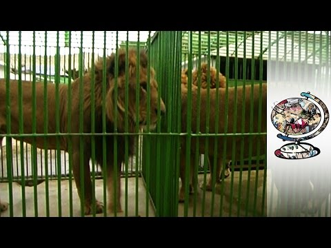 Exotic Animal Smuggling is a Problem in Africa & the Middle