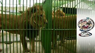 Exotic Animal Smuggling is a Problem in Africa & the Middle East