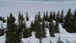 Blue Spruce (North 40 Field)-Part 1
