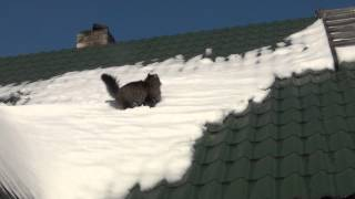 Cat Slips In The Roof