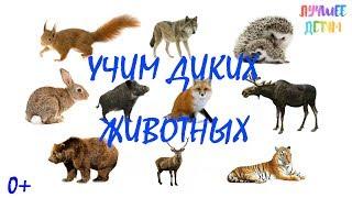 Дикие животные. Учим диких животных для детей на русском / Лучшее детям