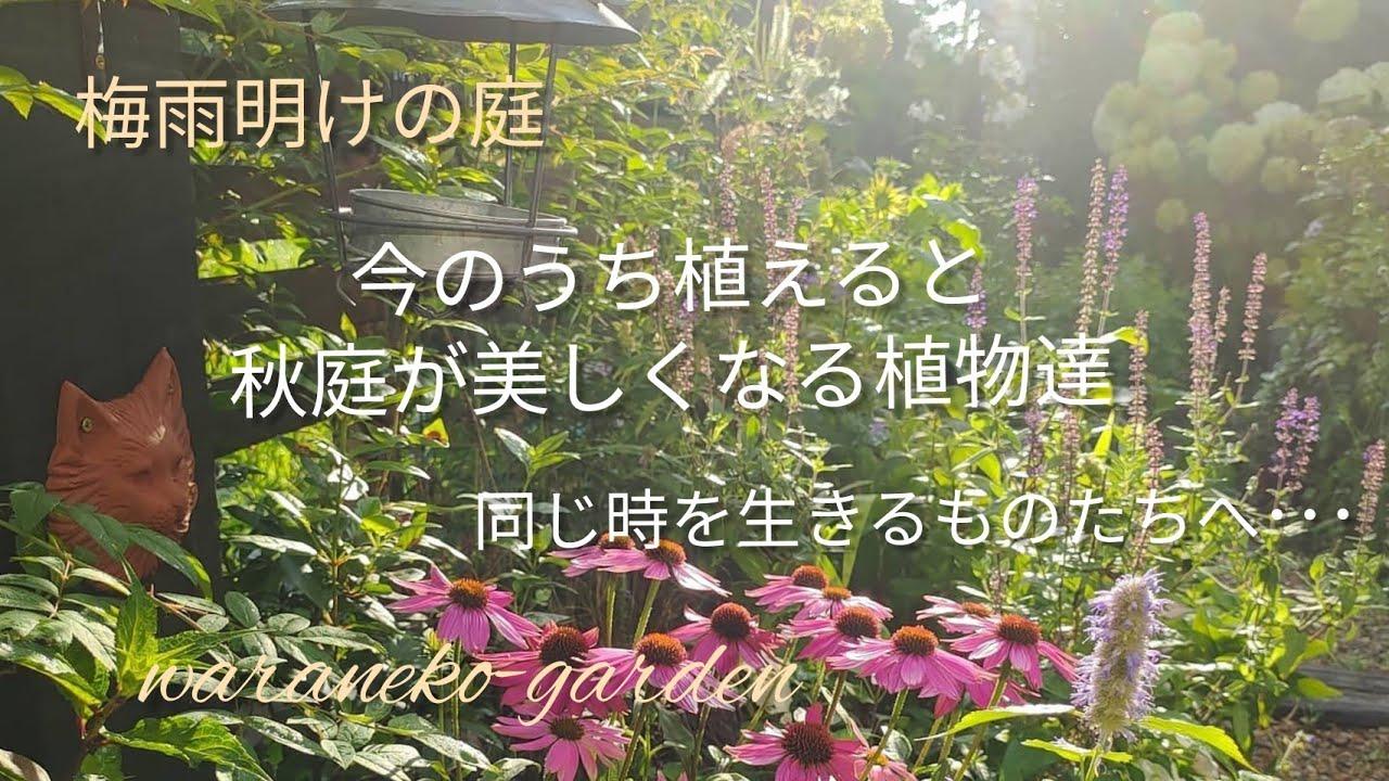 梅雨明けの庭 今のうち植えると秋庭が美しくなる植物達 同じ時を生きるものたちへ・・・\Garden after the rainy season
