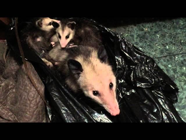 Possum Closet Clutter