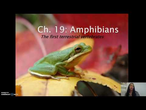 Zoology - Amphibians