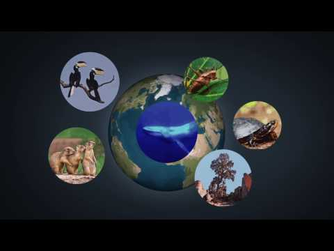 Ecosystems and Climate Change