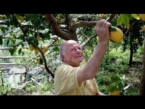 A Legacy of Lemons on the Amalfi Coast - 2013 | The New York Times
