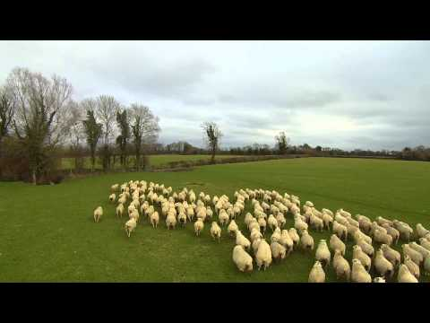 SHEP the Drone - Worlds first Drone Sheepdog