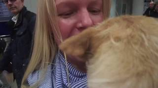 Gobi meets Mum - Pupdate 14th November 2016