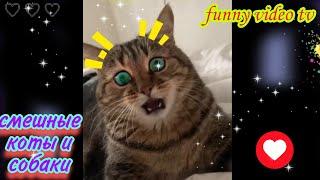 смешные коты и собаки, приколы с животными, смешные животные, 2021,все самое новое, наши питомцы,))