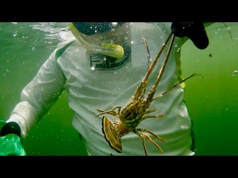 【RV TRAVEL - FLORIDA SEASON】Caught Lobsters In Key West!【露營車旅行 - 佛羅里達州】在西礁島抓龍蝦!