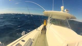 Kite Fishing- Miami 42' Yellowfin