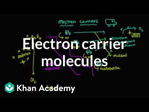 Electron carrier molecules | Biomolecules | MCAT | Khan Academy