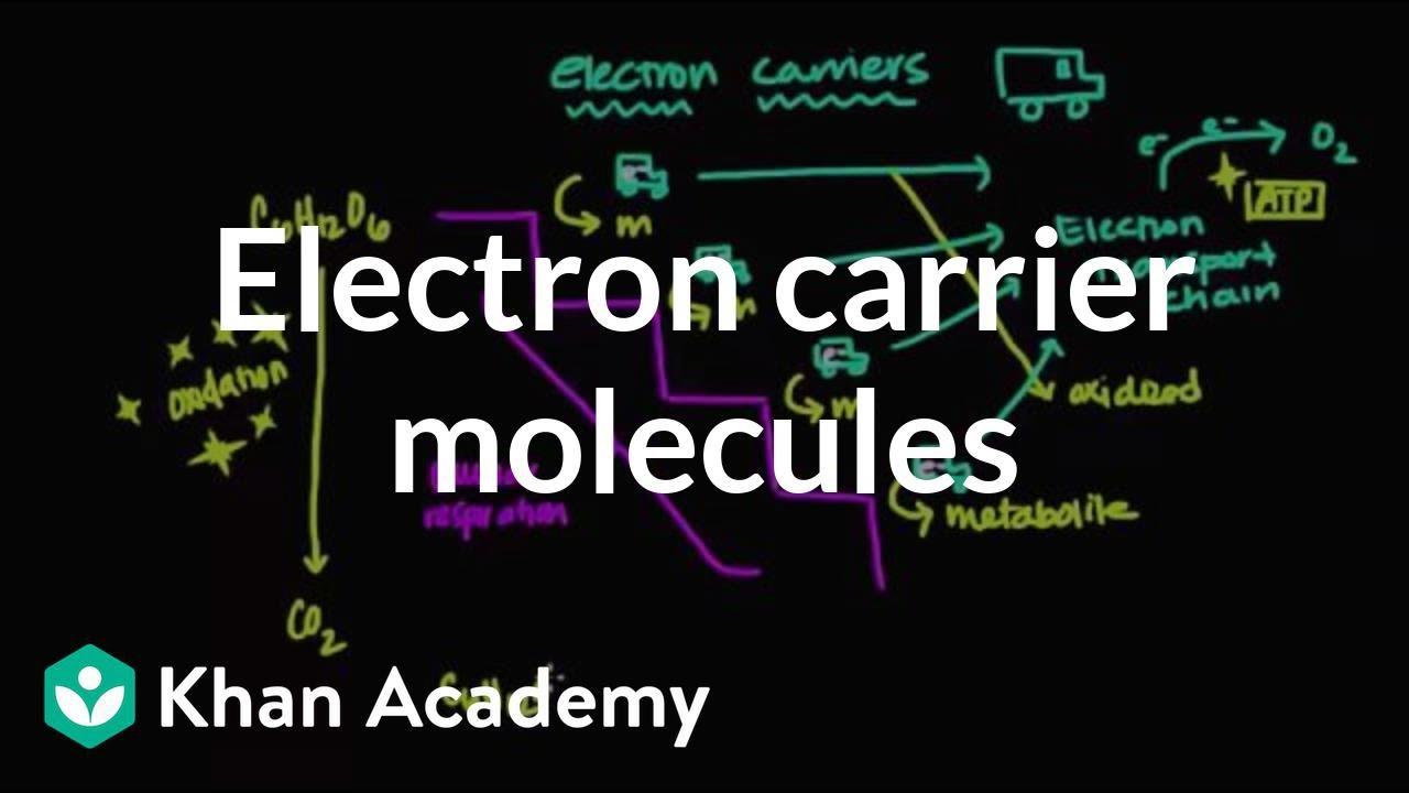 Electron carrier molecules (video) | Khan Academy