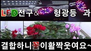 화초키우기식물성장LED전구와형광등을결합시켜주니꽃들이활짝…