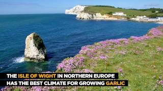 Video Garlic Festival | The Isle of Wight download MP3, 3GP, MP4, WEBM, AVI, FLV Juni 2018