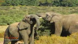 Amazing African Nature Scenes and Animals – Africa Travel Channel