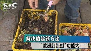 """解決廚餘新方法 """"歐洲紅蚯蚓""""功能大"""