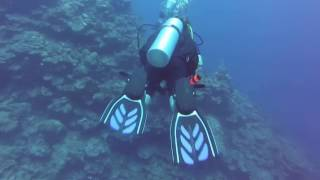 dive 4 part 1 feed ing shark and black tip sharch