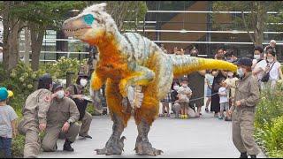 DINO-A-LIVE Utahraptor Greeting/TACHIKAWA Green Springs ≪4K30P≫