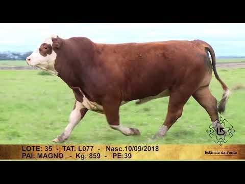 LOTE  35   TAT L077