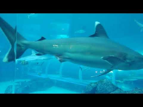 SEA Aquarium  - Universal Studios Singapore