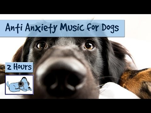 Anti Anxiety Music for Nervous or Stressed Dogs or Puppies, Help with Separation Anxiety