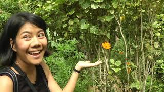 สวนผีเสื้อแห่งแรกในสปป.ลาว (Kuang Si Falls Butterfly Park (Luang Prabang))