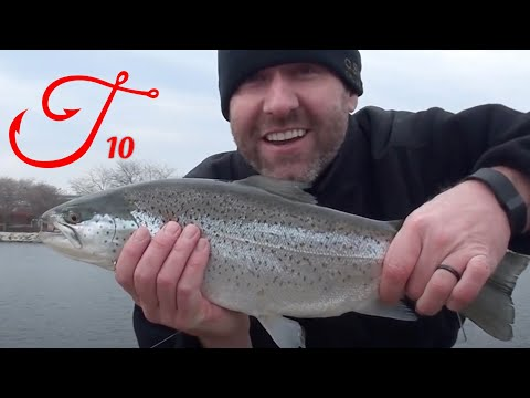 Lake Michigan Trout In Milwaukee Harbor On Spawn Sacs