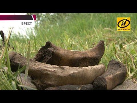 Новые находки в Брестской крепости: из земли подняли останки девяти человек