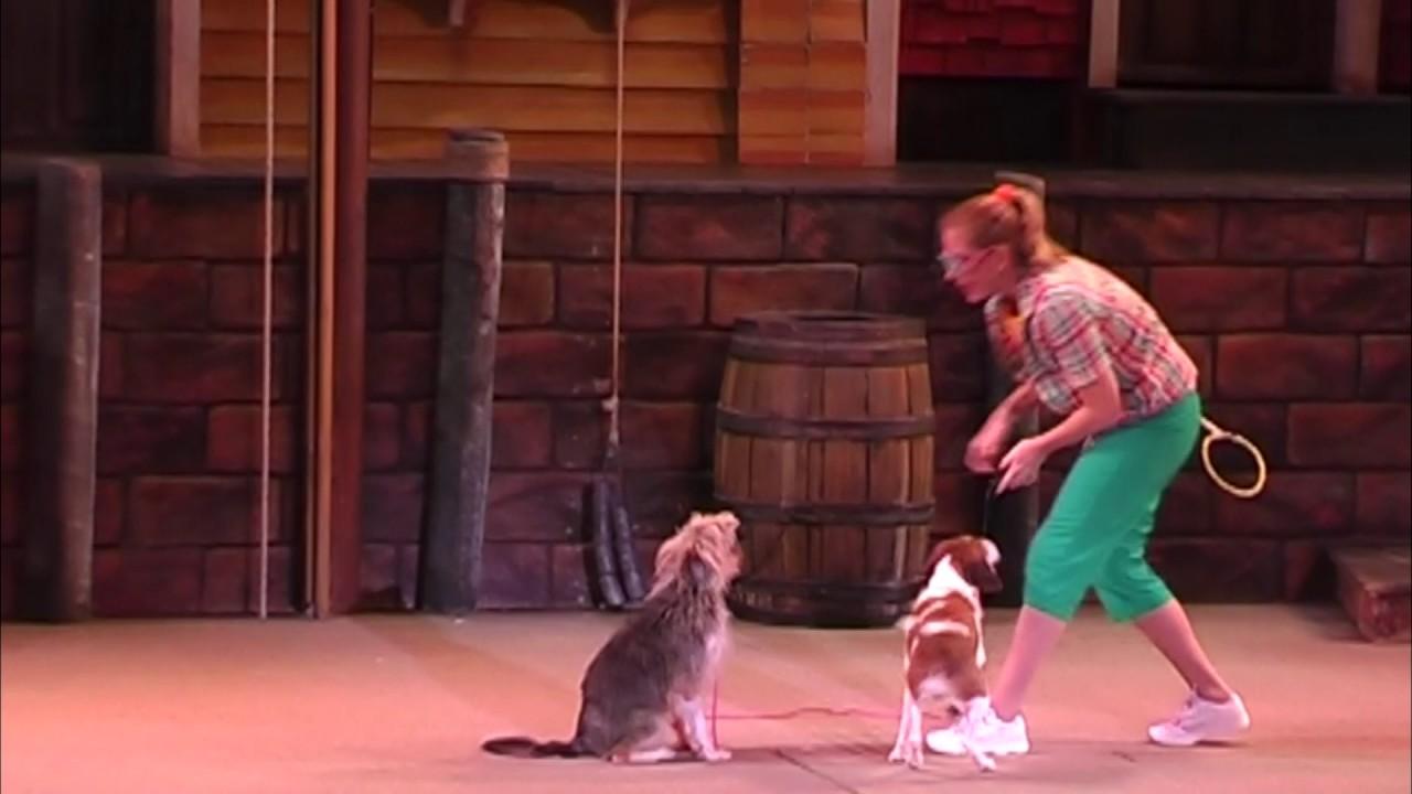 Pets Ahoy Animal Show at SeaWorld Orlando