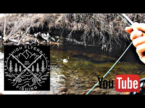 Fly Fishing For Trout During Quarantine | Clear Creek | Wyo Creeks Pt.1