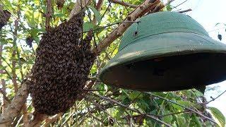 Săn Ong Mật Phát Hiện Điều Kỳ Lạ Chưa Từng Thấy   Hành Trình Săn Ong (Part 9)