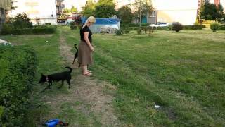 Nitro Nice And Lovely, trening obedience - 17.07.2014