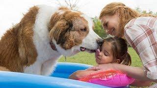Собачья жизнь 2-Обзор