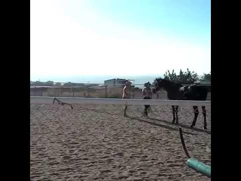 Как работает приглашение лошади в свое пространство